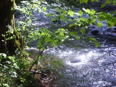 Bachlauf im Eifelwald
